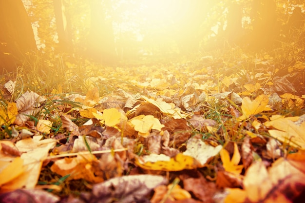 Herbstlandschaft. Kostenlose Fotos