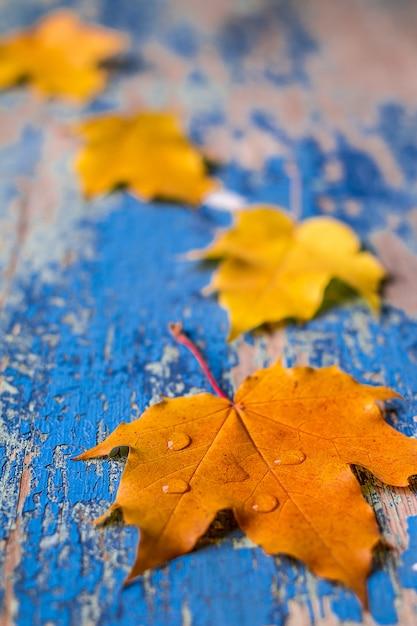 Herbstlaub auf dem hölzernen cyan-blauen schreibtisch des schmutzes Premium Fotos
