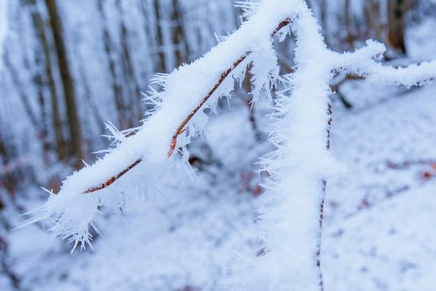 Herbstlaub auf einem baum im schnee Premium Fotos