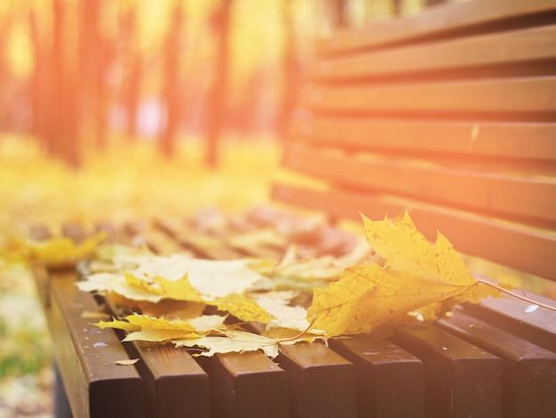 Herbstlaub auf einer bank im wald, roter und orange autumn leaves background Premium Fotos
