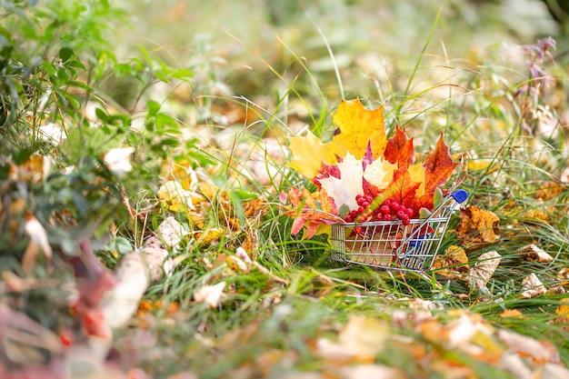Herbstlaub in einem supermarktwagen Premium Fotos