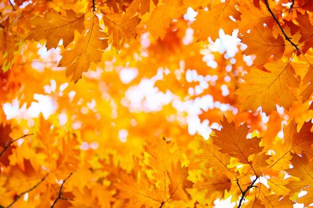 Herbstlaub, sehr flacher fokus Premium Fotos