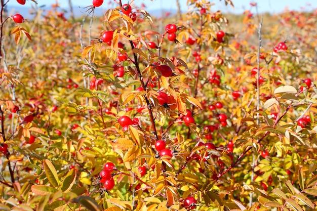 Herbstlicher busch von Premium Fotos