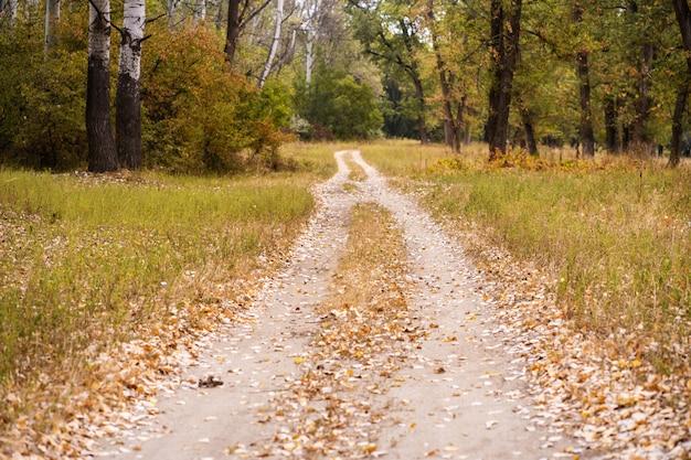 Herbstlicher wilder wald. ausgetretener weg, gefallene gelbe blätter und vergilbtes gras Premium Fotos