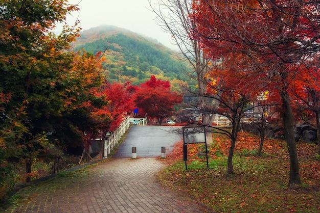 Herbstpark in kawaguchiko mit nebel Premium Fotos