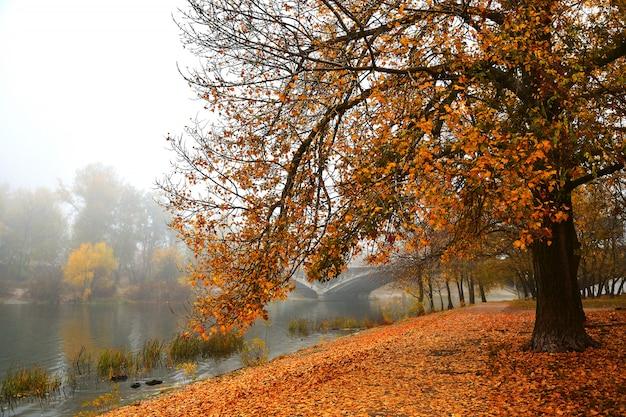 Herbstpromenade an einem nebligen morgen. heller herbsthintergrund. Premium Fotos