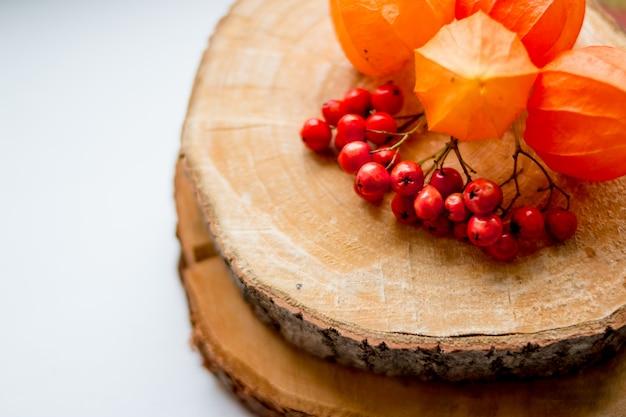 Herbststillleben. ebereschenbeeren und physalis auf dem baumstumpf Premium Fotos