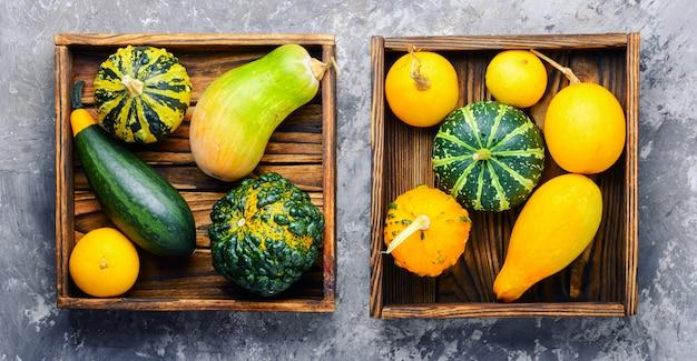 Herbststillleben mit kürbisen Premium Fotos