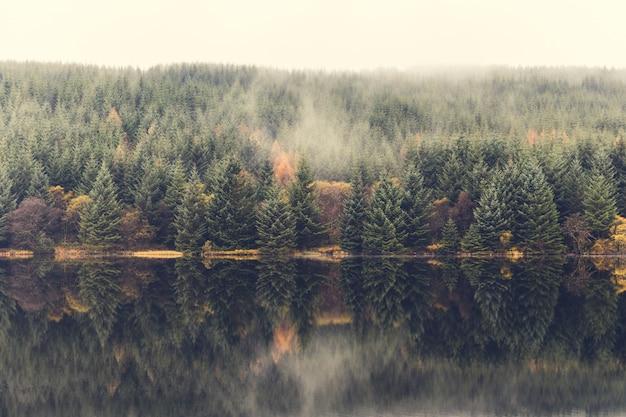 Herbstszene, nebel über den bäumen neben dem see Premium Fotos