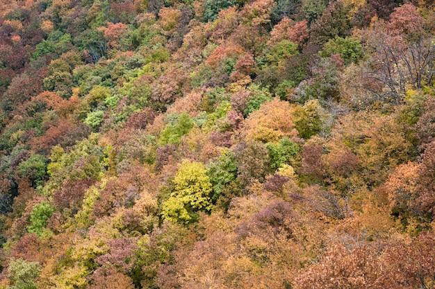 Herbstwald Premium Fotos