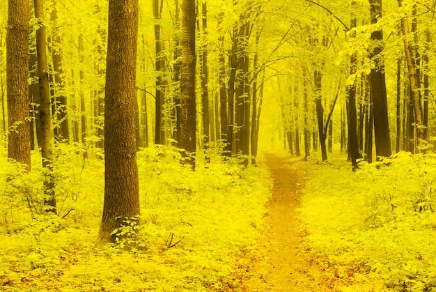 Herbstweg Premium Fotos