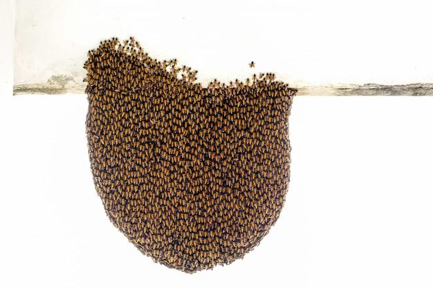 Herde der biene hängen außerhalb des nestes, um das nest zu schützen Premium Fotos