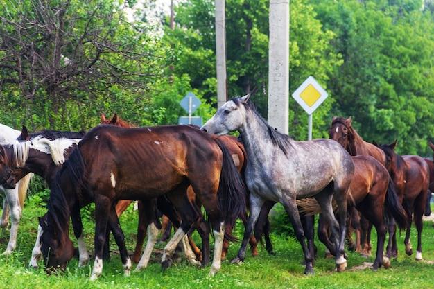 Herde von pferden, die im frühjahr oder sommer weiden lassen Premium Fotos