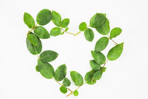 Herzform gemacht mit grünen blättern auf weißem hintergrund Kostenlose Fotos