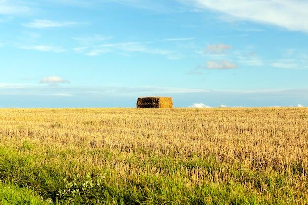 Heuhaufen stapelten stroh nach der ernte im landwirtschaftlichen bereich. foto in der herbstsaison Premium Fotos