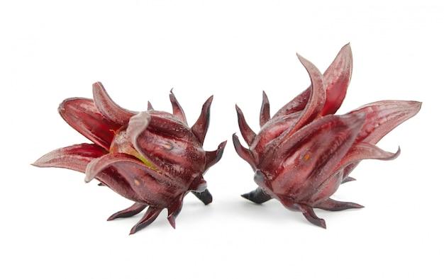 Hibiscus sabdariffa auf weiß Premium Fotos