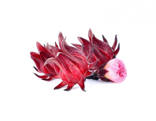 Hibiscus sabdariffa oder roselle früchte isoliert auf weißem hintergrund. Premium Fotos