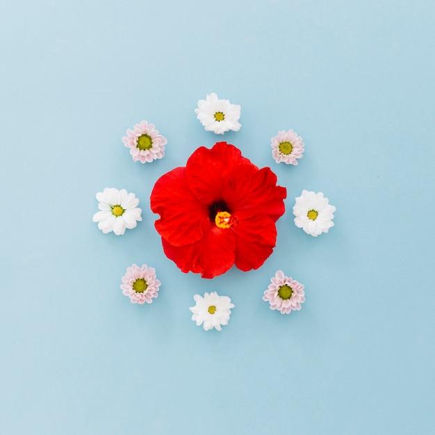 Hibiskus und gänseblümchen Kostenlose Fotos