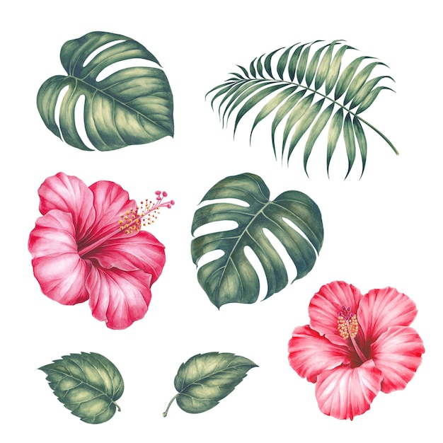 Hibiskusblüten und palmblättern. Premium Fotos