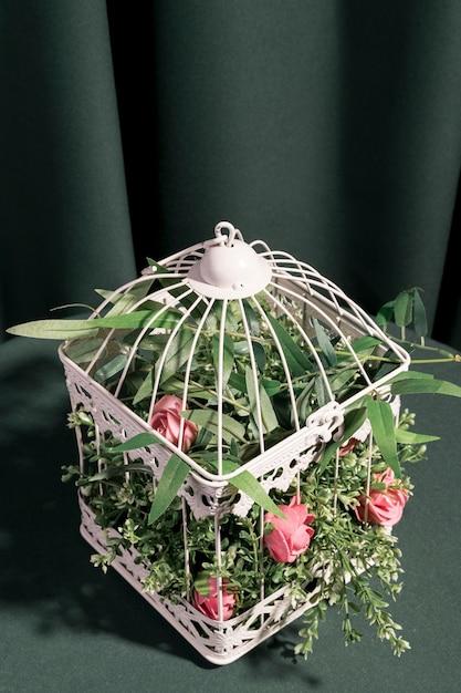 High angle rosen in weißen käfig gesperrt Kostenlose Fotos