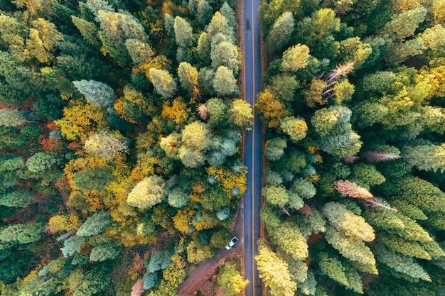 High angle shot einer straße mitten in einem herbstwald voller bunter bäume Kostenlose Fotos