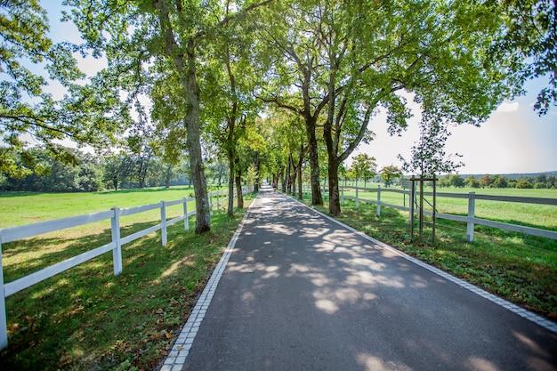 High angle shot einer straße, umgeben von zäunen und bäumen in lipica, nationalpark in slowenien Kostenlose Fotos
