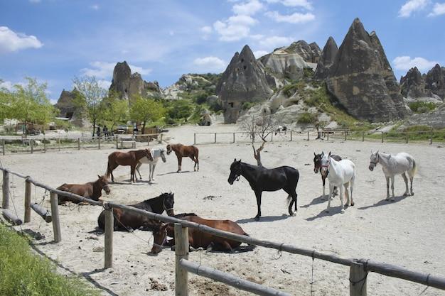High angle shot von pferden in der nähe von riesigen felsformationen unter dem bewölkten himmel Kostenlose Fotos