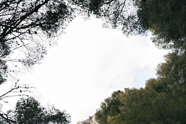 Himmel gesehen durch die grüne baumspitze im wald Kostenlose Fotos