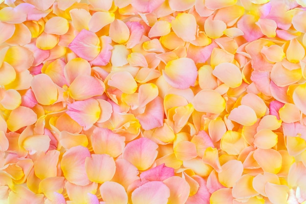 Hintergrund der rosa rosenblätter hautnah Premium Fotos