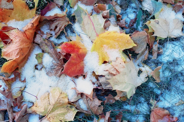 Hintergrund des gelben herbstlaubs im schnee Premium Fotos