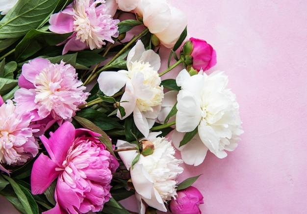 Hintergrund mit rosa pfingstrosen Premium Fotos