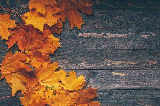 Hintergrund von hellen blättern des herbstes Premium Fotos
