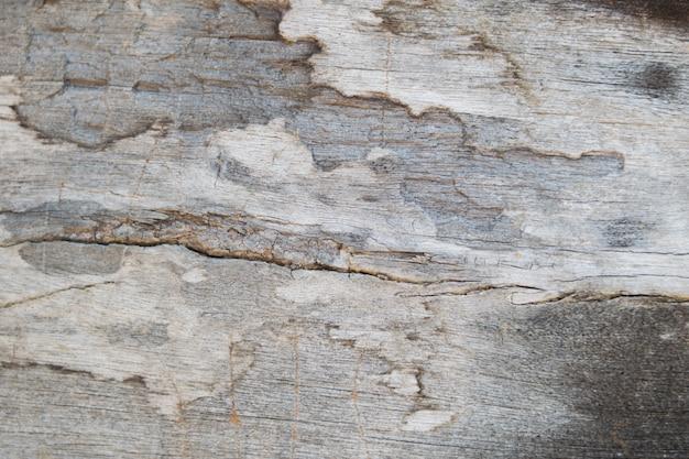 Hintergrund von hölzernem mit termitenschaden Premium Fotos