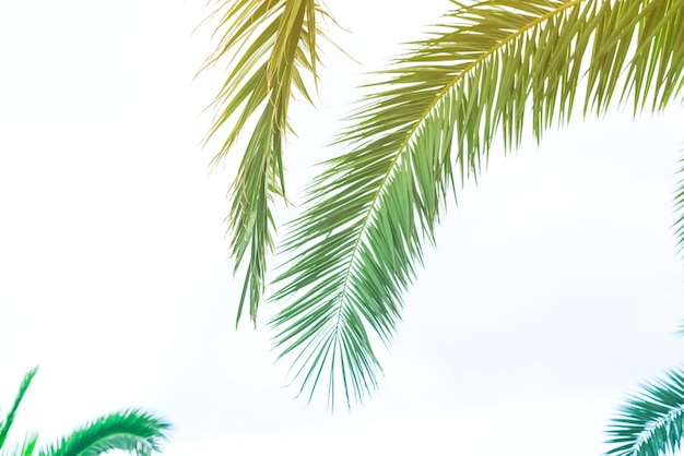 Hintergrund von palmblättern mit sonnenlicht für design, urlaubsreise-design tonte weinlese-pastelleffekt-kopien-raum Premium Fotos