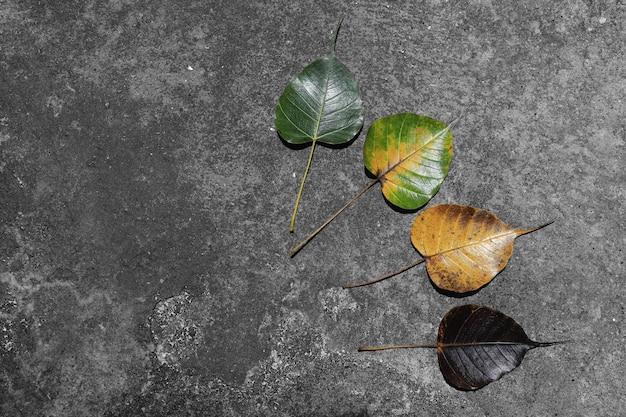 Hinterlässt farbwechsel und variationskonzept für herbst und saisonwechsel Premium Fotos