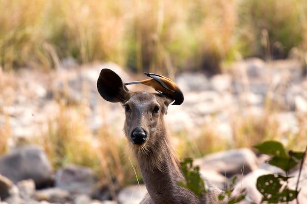 Hirsch und vogel in der natur Premium Fotos