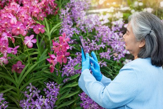Hobbys der reifen frau, die digitale tablette beim überprüfen des wachstums von orchideenblumen und des arbeitens in einem gewächshaus verwendet. Premium Fotos