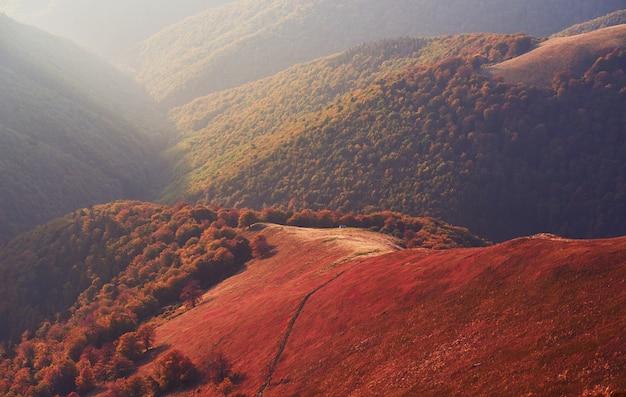 Hochlandvegetation bescheidener sommer und ungewöhnlich schöne farben blühen im herbst vor kaltem wetter. blaubeeren leuchtend rot, nadelwald grün, orange buk-berge sinie-fantastischer charme. Kostenlose Fotos