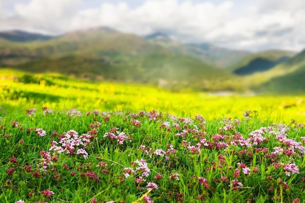Hochlandwiese in pyrenäen Kostenlose Fotos