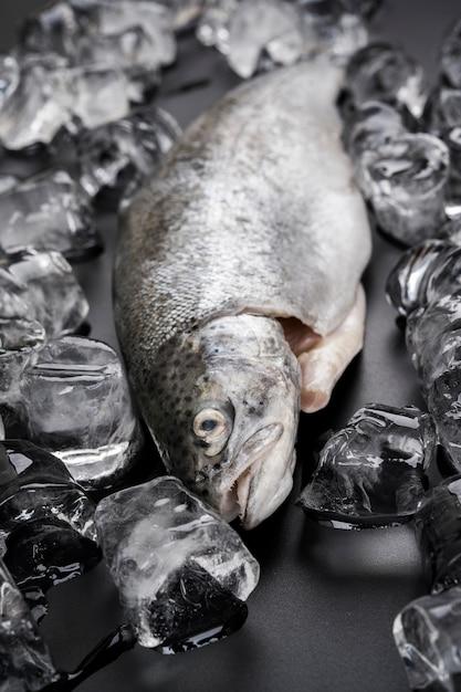 Hochwinkelfisch mit eiswürfeln Premium Fotos
