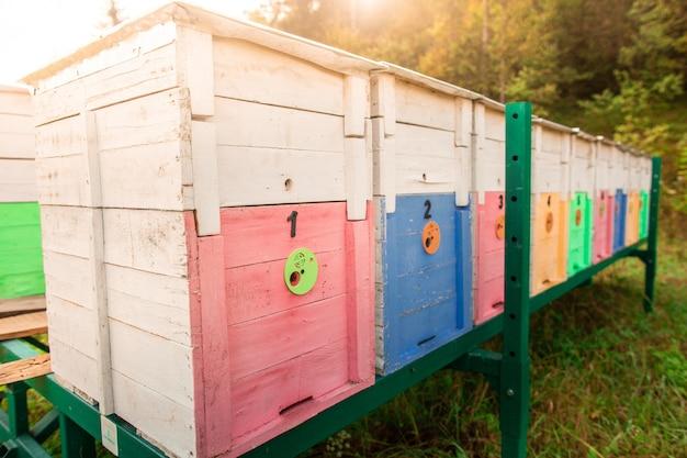 Hölzerne farbige bienenstöcke auf metallischen grünen ständen Premium Fotos