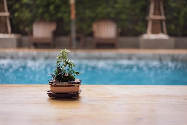 Hölzerne tischplatte und kleiner baum, bonsai in im freien mit unschärfeswimmingpool und strandstuhl Premium Fotos
