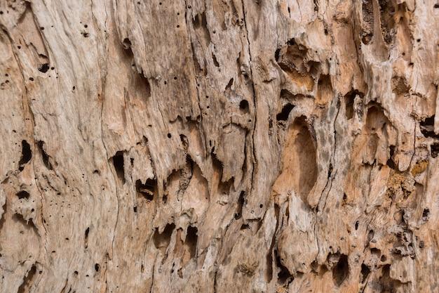 Hölzerner baumzerfall vom schaden vom termitennatur-beschaffenheitshintergrund Premium Fotos