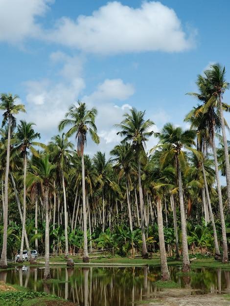 Hohe palmen mit reflexion im wasser, insel nusa penida nahe bali Premium Fotos