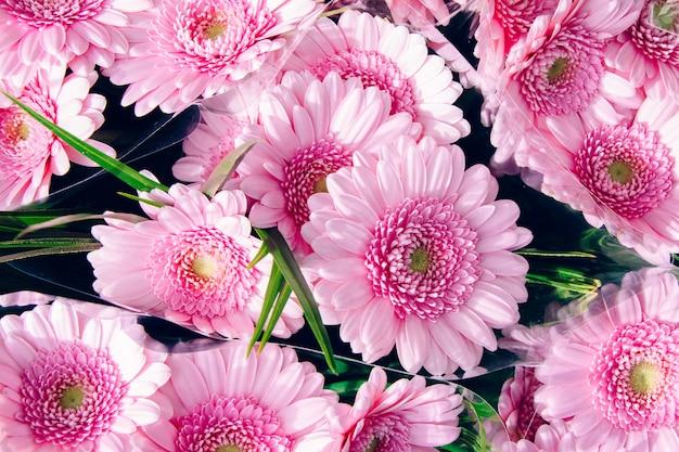 Hohe winkel-nahaufnahmeaufnahme der schönen hellrosa barberton-gänseblümchen Kostenlose Fotos