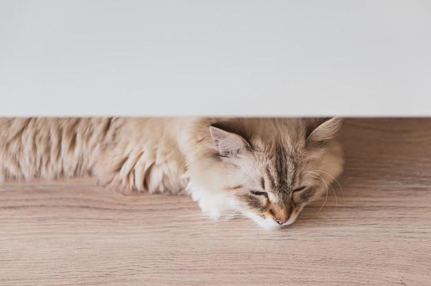 Hohe winkel-nahaufnahmeaufnahme einer niedlichen katze, die auf dem holzboden unter einer weißen oberfläche liegt Kostenlose Fotos