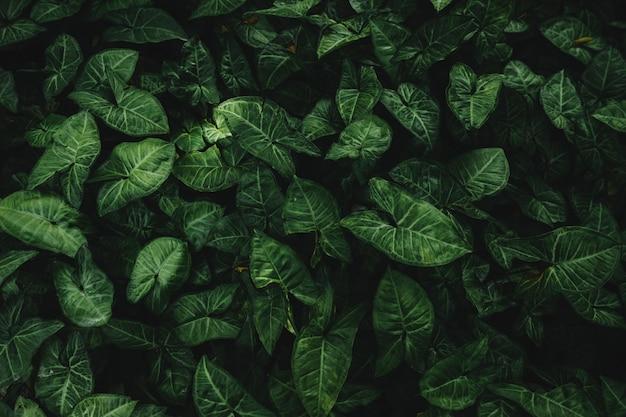 Hohe winkelsicht von grünen blättern Kostenlose Fotos