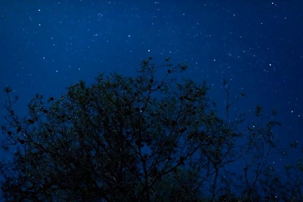 Hoher baum des niedrigen winkels mit sternenklarem nachthintergrund Kostenlose Fotos