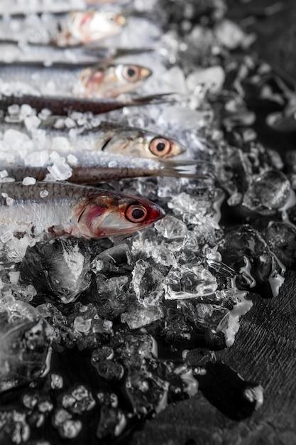 Hoher winkel von kleinen fischen auf eis Kostenlose Fotos