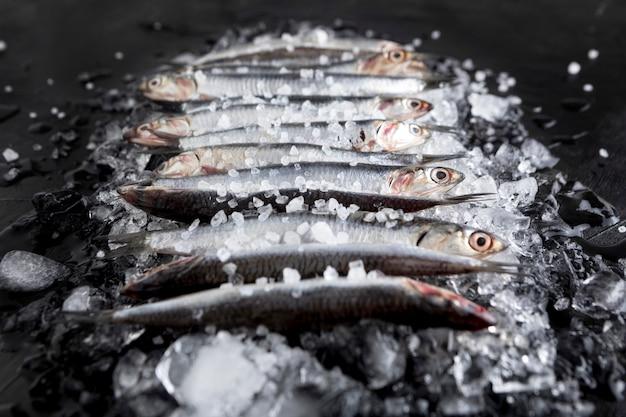 Hoher winkel von kleinen fischen auf eiswürfeln Kostenlose Fotos